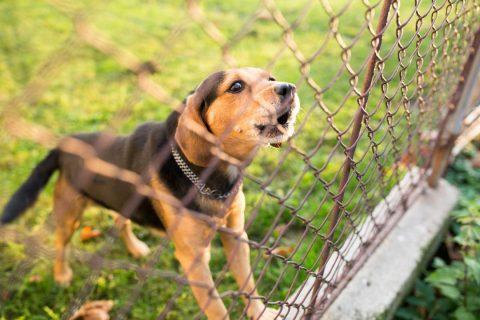 Chien derrière une clôture