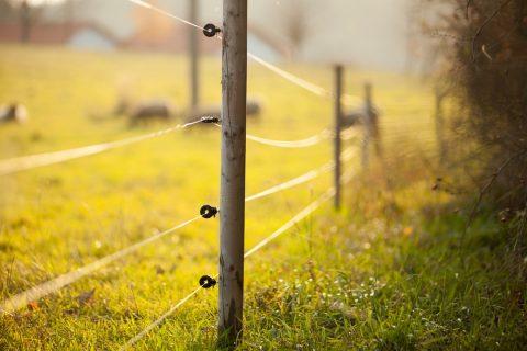 Une clôture de type agricole