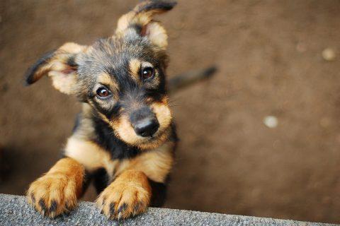 Petit chien devant une clôture