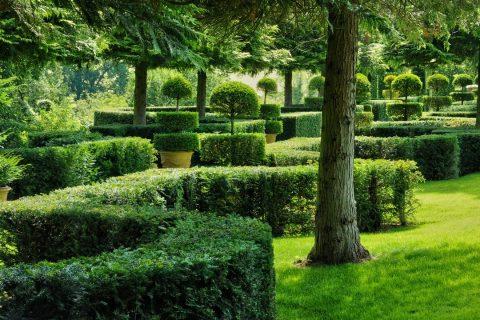 Des clôtures avec des arbustes et des arbres