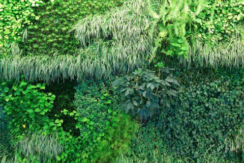 Une clôture végétale